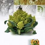 legume_fractal